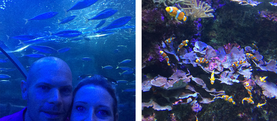 san_sebastian_aquarium