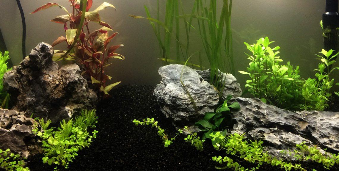 aquarium planté