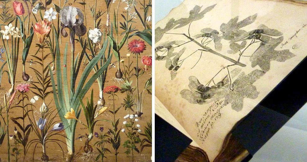 herbier - expo jardins - grand palais