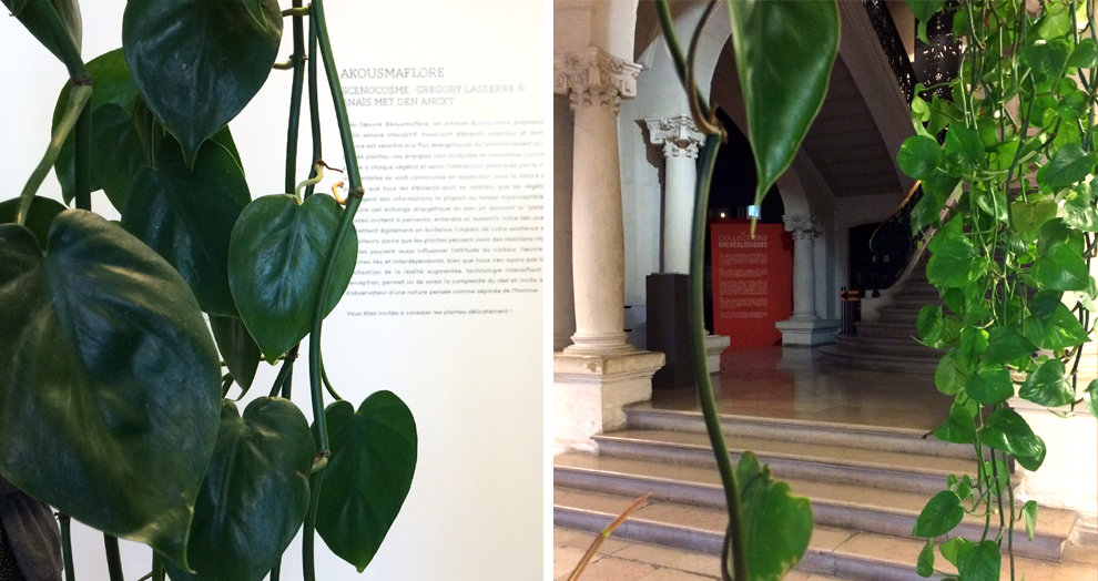 Akousmaflore - exposition Verdures