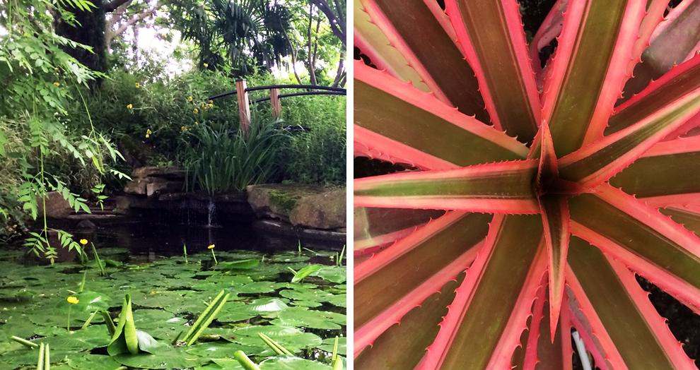 jardin botanique clermont