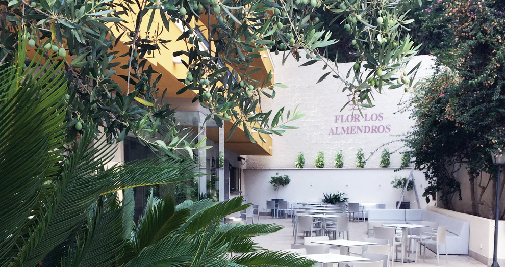 Hebergement Mallorque : Flor Los Almendros