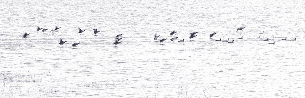 oiseaux lac du pecher