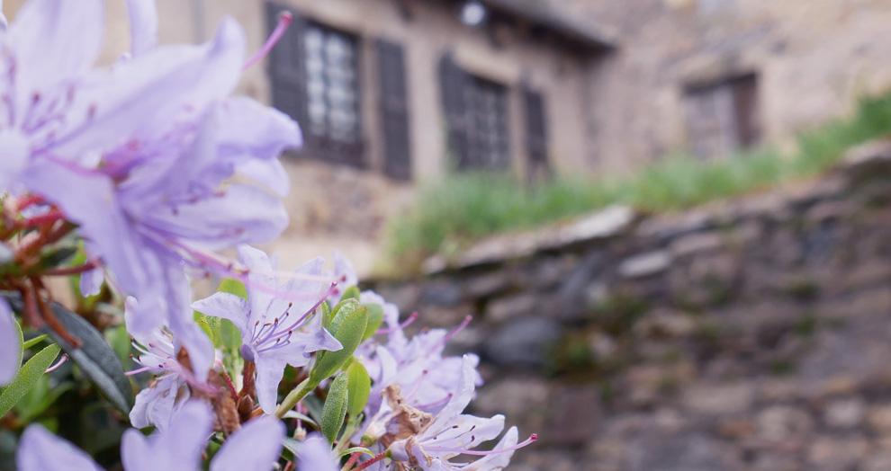 fleurs à Saint Come d'Olt