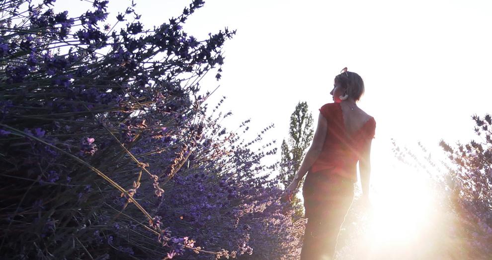 coucher de soleil dans un champs de lavande