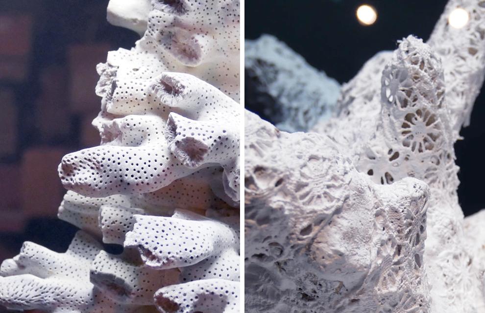 Corail artefact dentelle