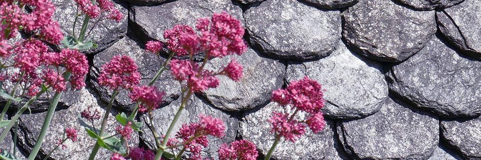 fleurs conques