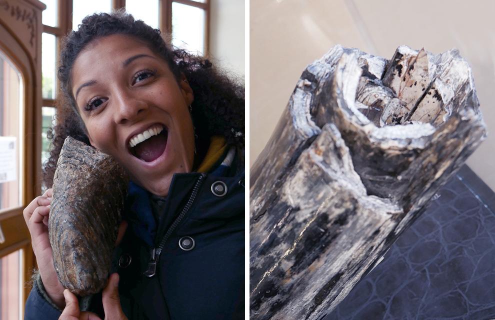 molaire et défense de mammouth