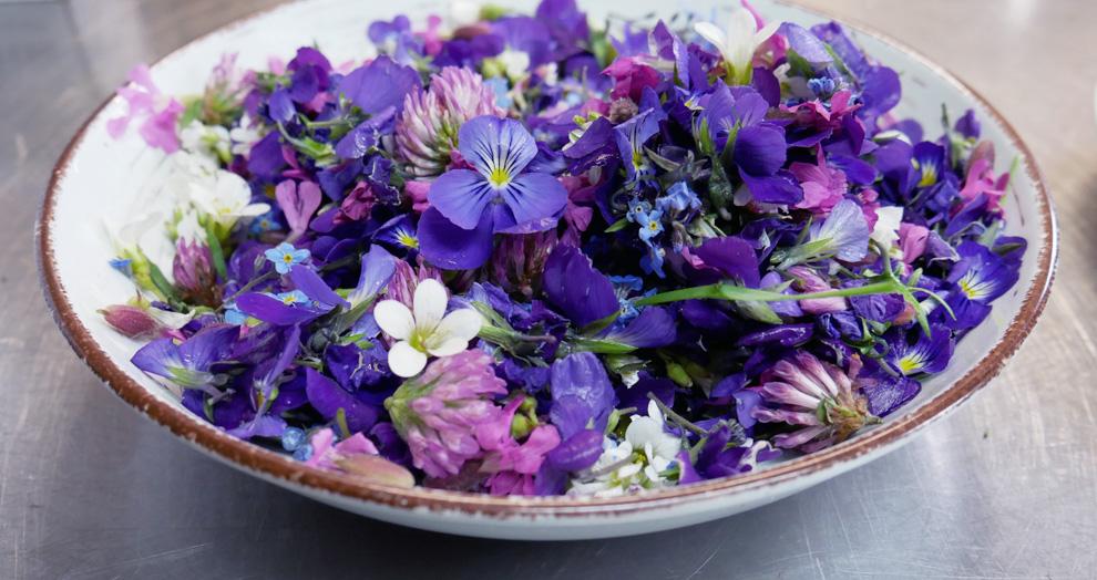 Cueillette fleurs sauvages