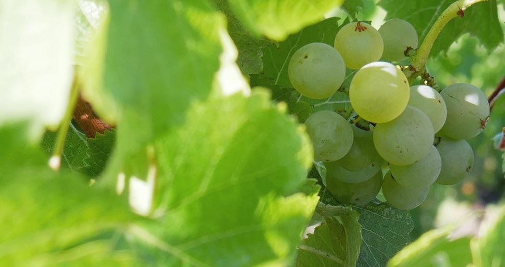 visite de vignoble Bergerac