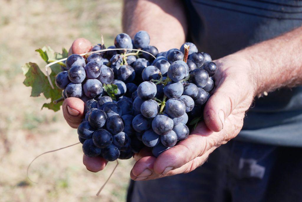 raisin cotes du rhone