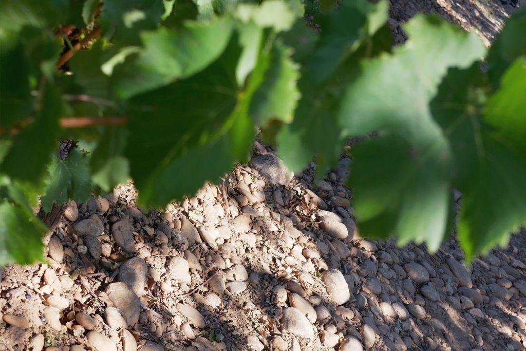 vignes cotes du rhone, galets roulés