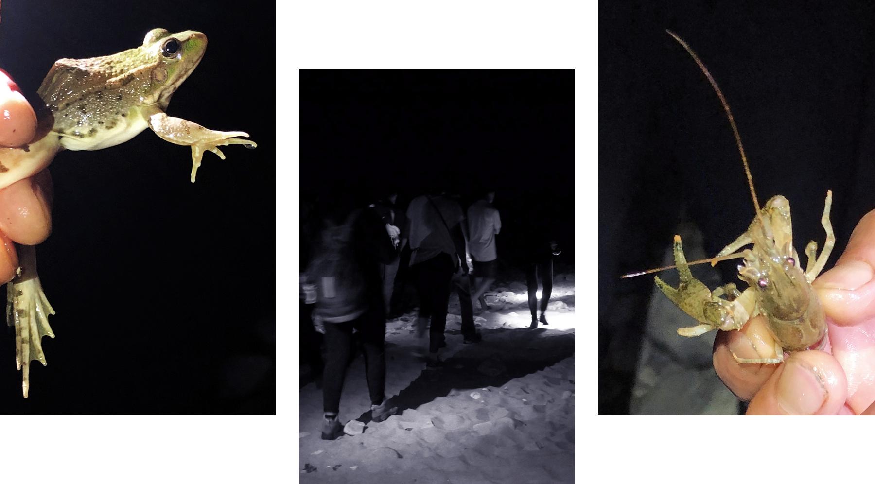 grenouille et écrevisse, la nuit au bivouac de gaud