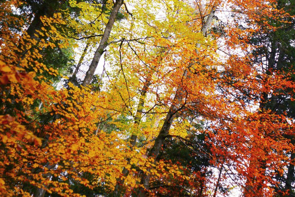 couleurs d'automne à la forêt des arboris