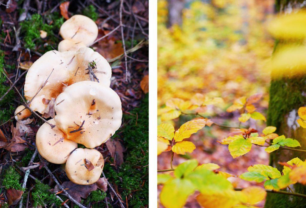 champignons à la foret des arboris